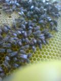 Včelí úly pro začínající včelaře a seniory