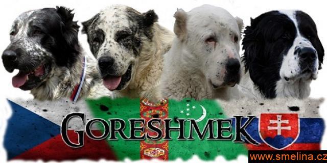 Středoasijský pastevecký pes - SAO s PP
